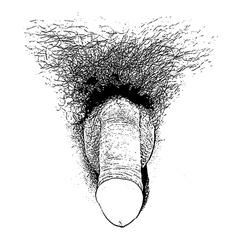 480px-Sketch_of_a_flaccid_penis